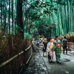 bamboo-trees-bridge-city-115603